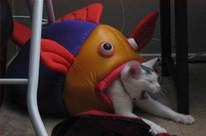 魚に食われる猫の面白画像