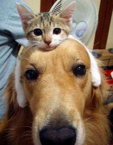 犬と猫の兄弟の面白画像