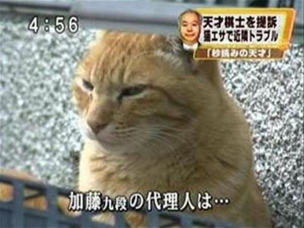 代理ネコの面白画像