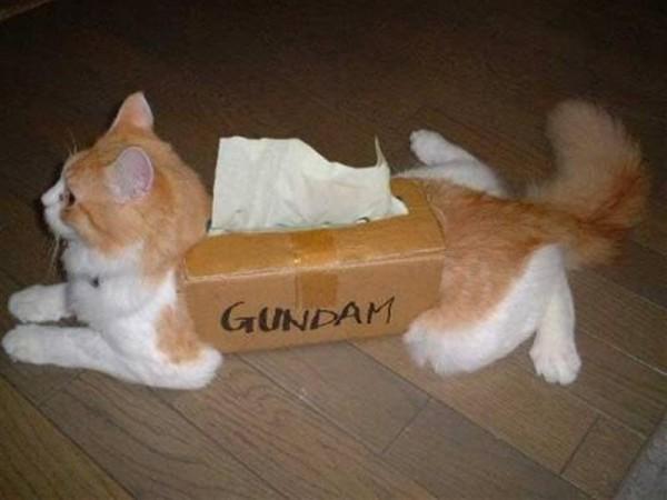 ティッシュ箱ネコの面白画像