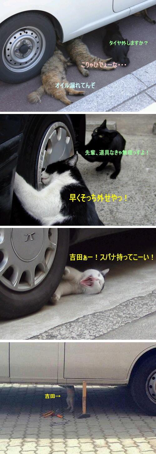 修理工ネコの面白画像