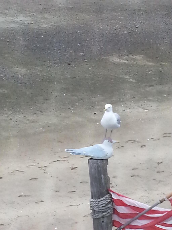 鳩 on 鳩の面白画像