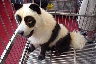 パンダと犬のハーフの面白画像