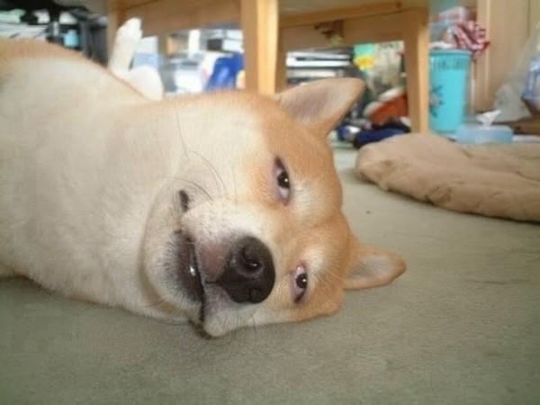人面犬の面白画像