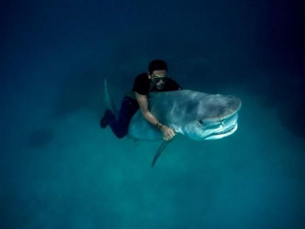 サメ男の面白画像
