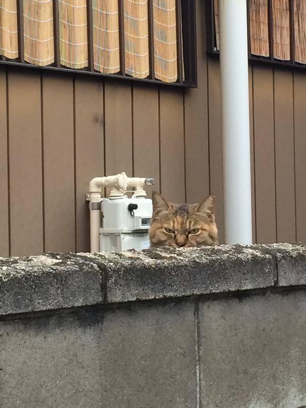 ネコ睨むの面白画像