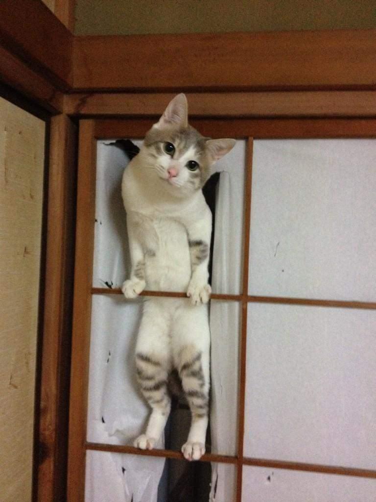 いたずらネコの面白画像
