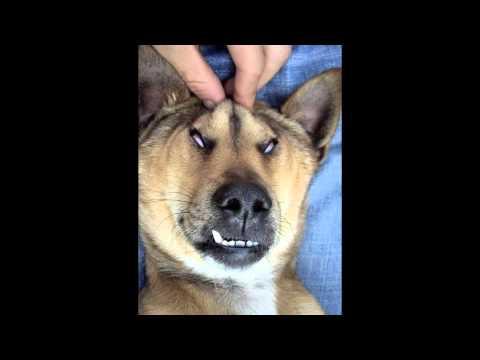 動画で面白画像!面白画像集!腹筋崩壊の笑いが止まらないおもしろ画像の面白画像