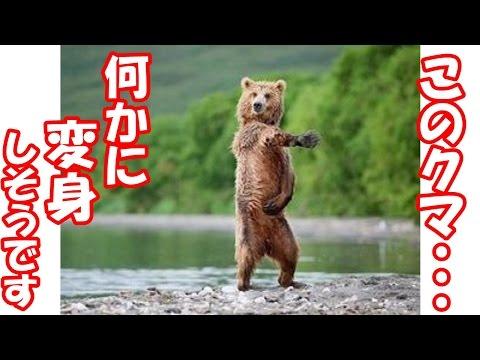 動画で面白画像!【腹筋崩壊】フフッて笑える面白画像集!人間みたいなクマたちwwの面白画像