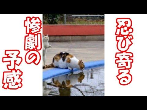 動画で面白画像!【腹筋崩壊】フフッて笑える面白画像集!動物編 #05の面白画像