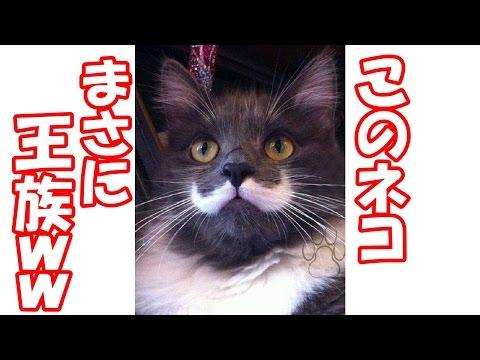 動画で面白画像!【腹筋崩壊】フフッて笑える面白画像集!動物編 #01の面白画像