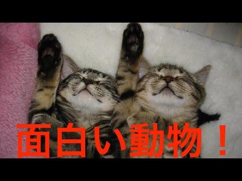 動画で面白画像!【面白い動物】爆笑!動物のかわいい面白画像!の面白画像