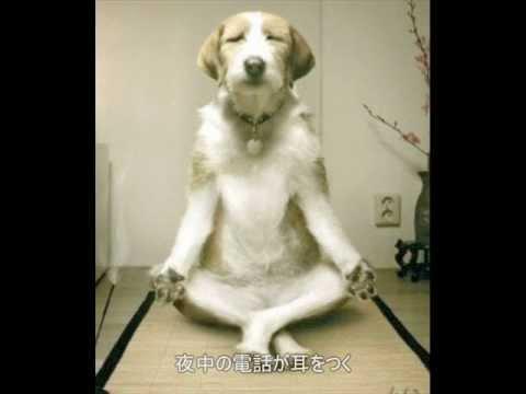 動画 犬 おもしろ めっちゃ面白い動物動画5つをご紹介