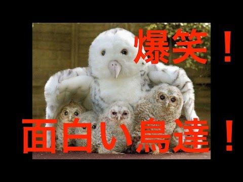 動画で面白画像!【面白い鳥】爆笑!鳥のかわいい面白画像!の面白画像
