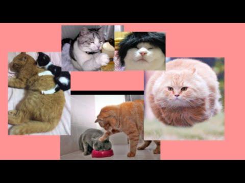 動画で面白画像!【吹いたら負け】猫の笑える画像スライドまとめ【猫おもしろ】の面白画像