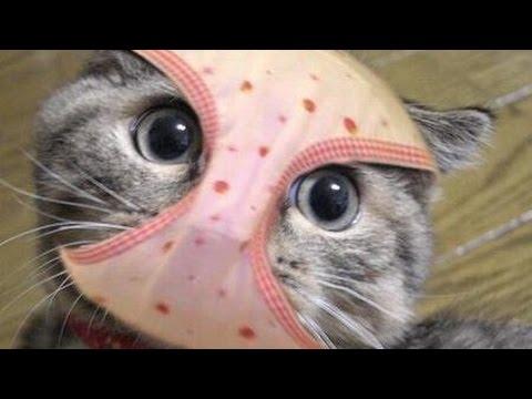 動画で面白画像!【吹いたら負け】ジワジワ来るネコのおもしろ画像集 疲れた時にどうぞ!の面白画像