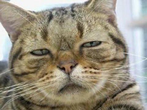 動画で面白画像!吹いたら負けおもしろ画像集|猫画像でボケてみたの面白画像