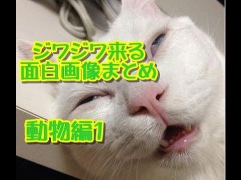 動画で面白画像!【ツイッターで話題】ジワジワ来る面白画像まとめ【動物編】パート1の面白画像