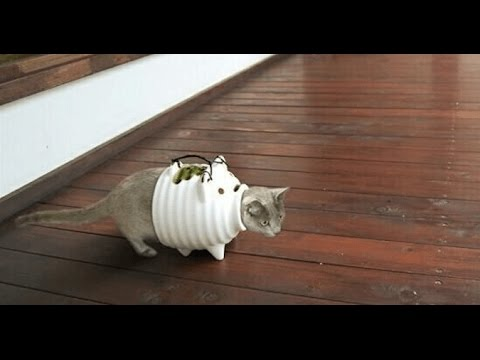 動画で面白画像!面白画像!いろんな所に入りたがる可愛い猫たち! Cute cat♡の面白画像