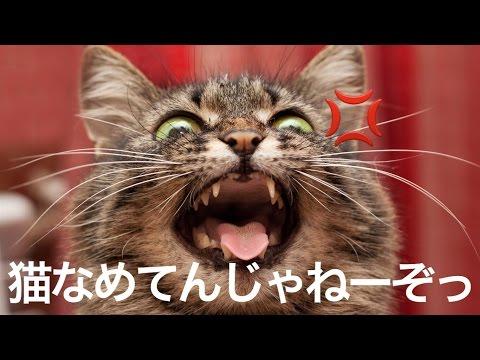 動画で面白画像!猫の面白画像がやばいwww愛らしさ120%!の面白画像