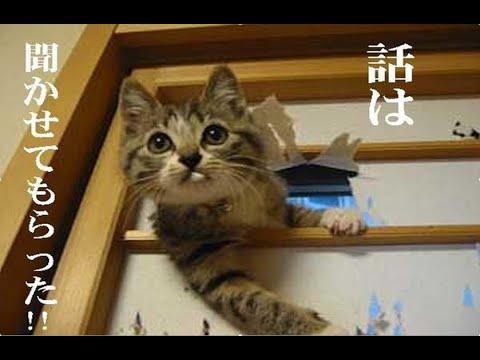 動画で面白画像!動物癒やし系写真集♪ 動物たちの面白画像でお楽しみください!の面白画像