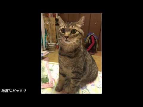 動画で面白画像!面白猫画像集めました1の面白画像