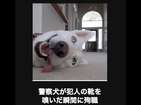 動画で面白画像!【腹筋崩壊】動物系おもしろ画像まとめwwwwの面白画像