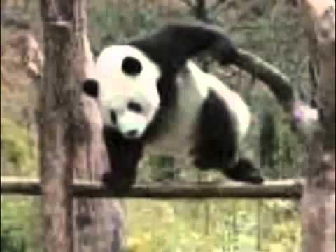 動画で面白画像!動物おもしろ画像集めました!の面白画像
