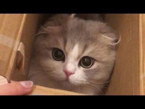 動画で面白画像!猫 かわいい – 猫 おもしろ – 最も面白い猫の動画 2017 #17の面白画像