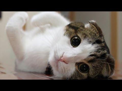 動画で面白画像!心癒される かわいい猫の厳選画像集 ネコ おもしろ 疲れた時にどうぞ!②の面白画像