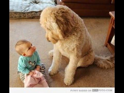 動画で面白画像!「かわいい犬」初めて人間の赤ちゃんに会った犬の反応が超面白いの面白画像