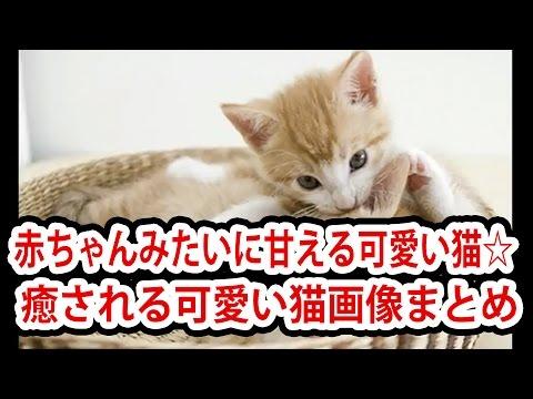 動画で面白画像!赤ちゃんみたいに甘える可愛い猫☆ 癒される可愛い猫画像まとめの面白画像