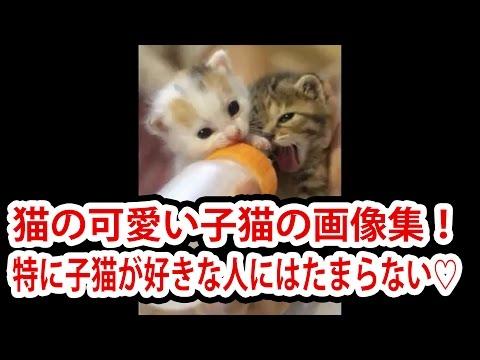 動画で面白画像!猫の可愛い子猫の画像集!特に子猫が好きな人にはたまらない♡の面白画像