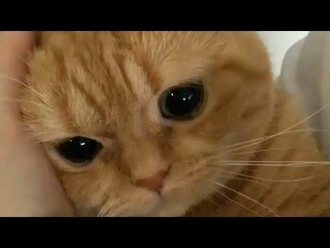 動画で面白画像!猫 かわいい – 猫 おもしろ – 最も面白い猫の動画 2017 #20の面白画像