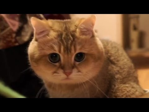 動画で面白画像!猫 かわいい – 猫 おもしろ – 最も面白い猫の動画 2017 #19の面白画像