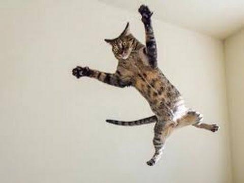 動画で面白画像!「絶対笑う」最高におもしろ犬,猫,動物のハプニング, 失敗画像集 #1の面白画像
