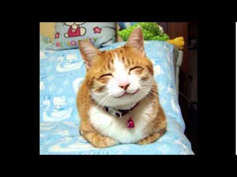 動画で面白画像!【面白画像】クスッとなる動物画像パート1 ~犬、猫【癒し】の面白画像