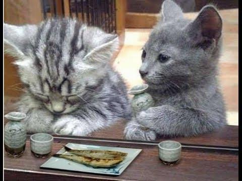 動画で面白画像!【猫ちゃん おもしろ】癒される動物画像集の面白画像