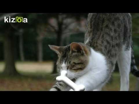 動画で面白画像!面白ペット画像集!fanny petsの面白画像