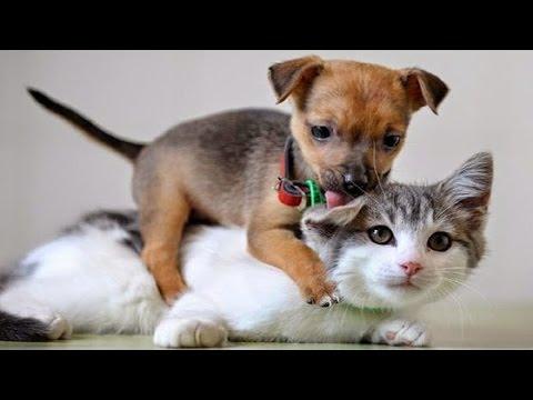 動画で面白画像!「絶対笑う」最高におもしろ犬,猫,動物のハプニング, 失敗画像集の面白画像