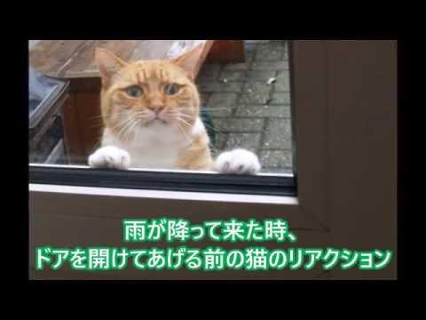 動画で面白画像!【吹いたら負け】ジワジワ来るww ネコのおもしろ画像集 おもしろ可愛い猫のツイートまとめ 疲れた時にどうぞ!ニヤニヤ出来る面白かわいい猫まとめ②の面白画像
