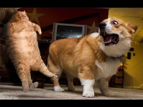 動画で面白画像!「絶対笑う」最高におもしろ犬,猫,動物のハプニング, 失敗画像集 #2の面白画像