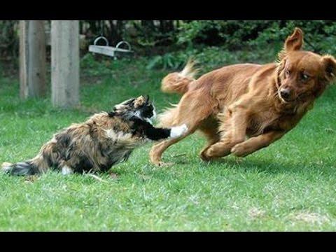 動画で面白画像!「絶対笑う」最高におもしろ犬,猫,動物のハプニング, 失敗画像集 #3の面白画像