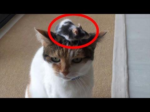 動画で面白画像!ジワジワ来るww ネコのおもしろ画像集 ニヤニヤ出来る面白かわいい猫まとめ 疲れた時にどうぞ!【吹いたら負け】の面白画像