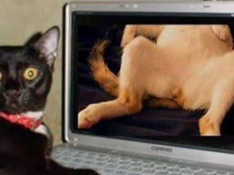 動画で面白画像!【笑】猫の面白画像集 Slideshow of Funny Catsの面白画像