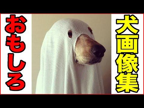 動画で面白画像!【おもしろ動物】いぬ・イヌ・犬編【爆笑画像集2】の面白画像