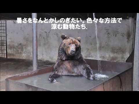 動画で面白画像!【おもしろ画像】 動物だって暑い!! 暑さをしのぐために色々やってみました。の面白画像