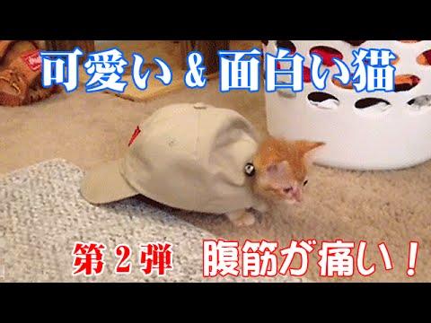 動画で面白画像!【おもしろネコ】最高傑作面白すぎるネコたちGIF画像ベスト20第2弾!の面白画像