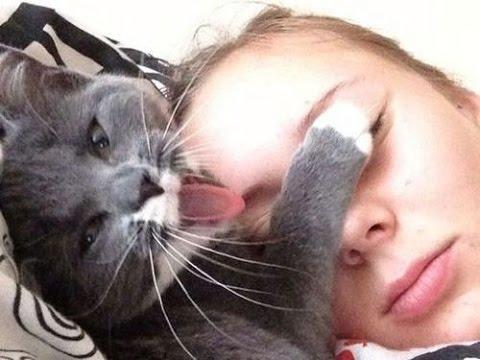 動画で面白画像!猫ってやつは……「猫あるある」な面白画像集!の面白画像