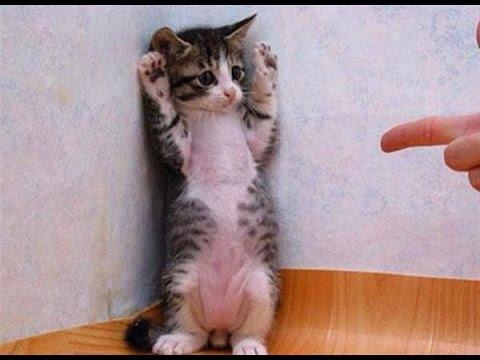 動画で面白画像!ネコのGIF画像がおもしろすぎるwwwの面白画像